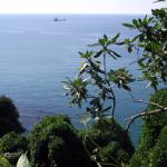 Ботанический сад.Батуми